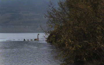 Legend of Nessie - Ultimate and Official Loch Ness Monster Site